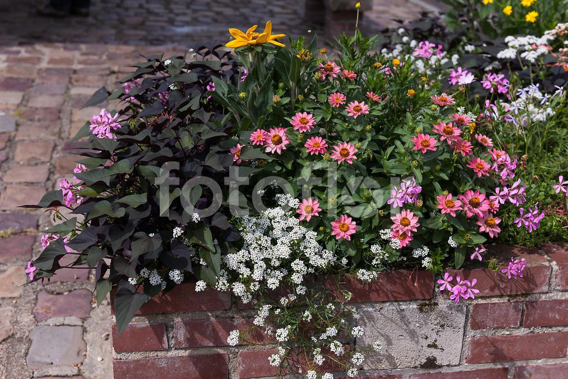 http www fotoflor com media c40d3745 3751 4c25 99e7 02c78258ad82 jardiniere de fleurs d ete melange