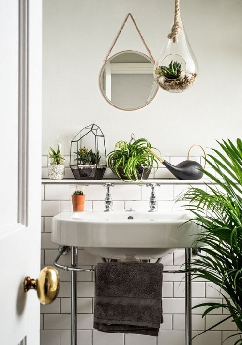 bathroom plant upgrade