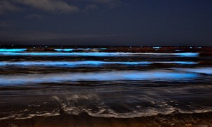 Japan's Blue Glowing Sea: Fantastic Natural Phenomena Known Between Locals