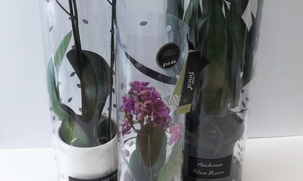 Staeger Revamps Tesco Finest Houseplants Packs