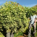 8 Things You Didn T Know About Hemp Pbs Newshour Weekend