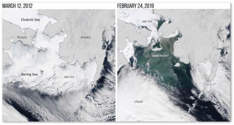 Sea ice cover in the Bering Sea on March 20, 2012 (left), and February 24, 2019 (right). Extremely low winter ice extents occurred in the Bering Sea in 2018 and 2019. NOAA Climate.gov image based on NASA satellite images from Worldview