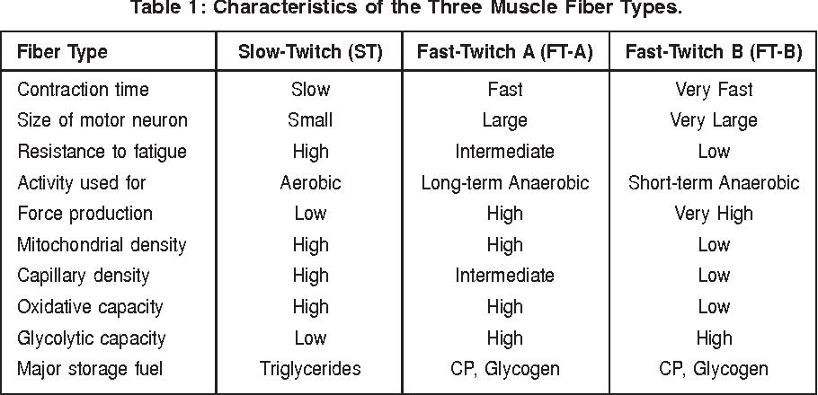 Afbeeldingsresultaat voor muscle fiber types