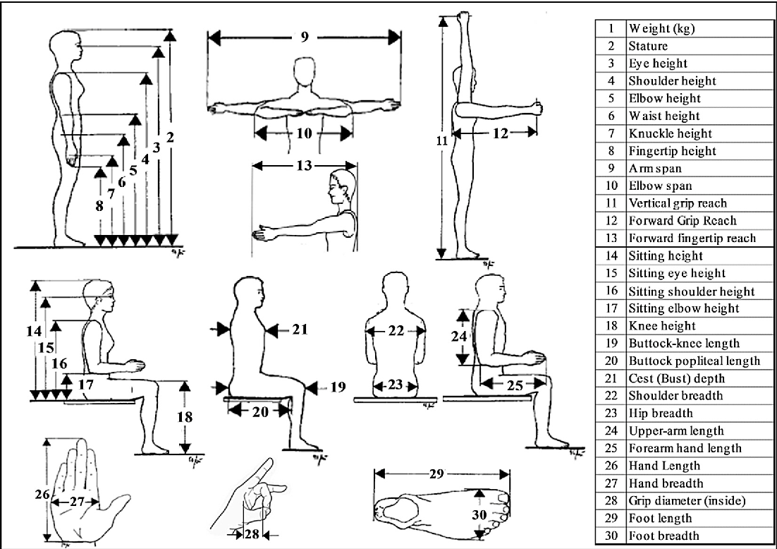 Figure 2 From Anthropometric Study Of Farm Workers On Java