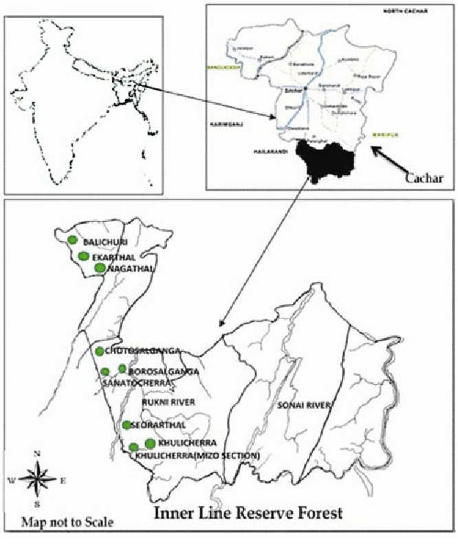 Get free samples to assess the assigned professional. Pdf Traditional Processing Of Non Timber Forest Products In Cachar Assam India Semantic Scholar