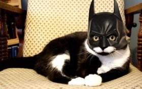 Image result for bat cat