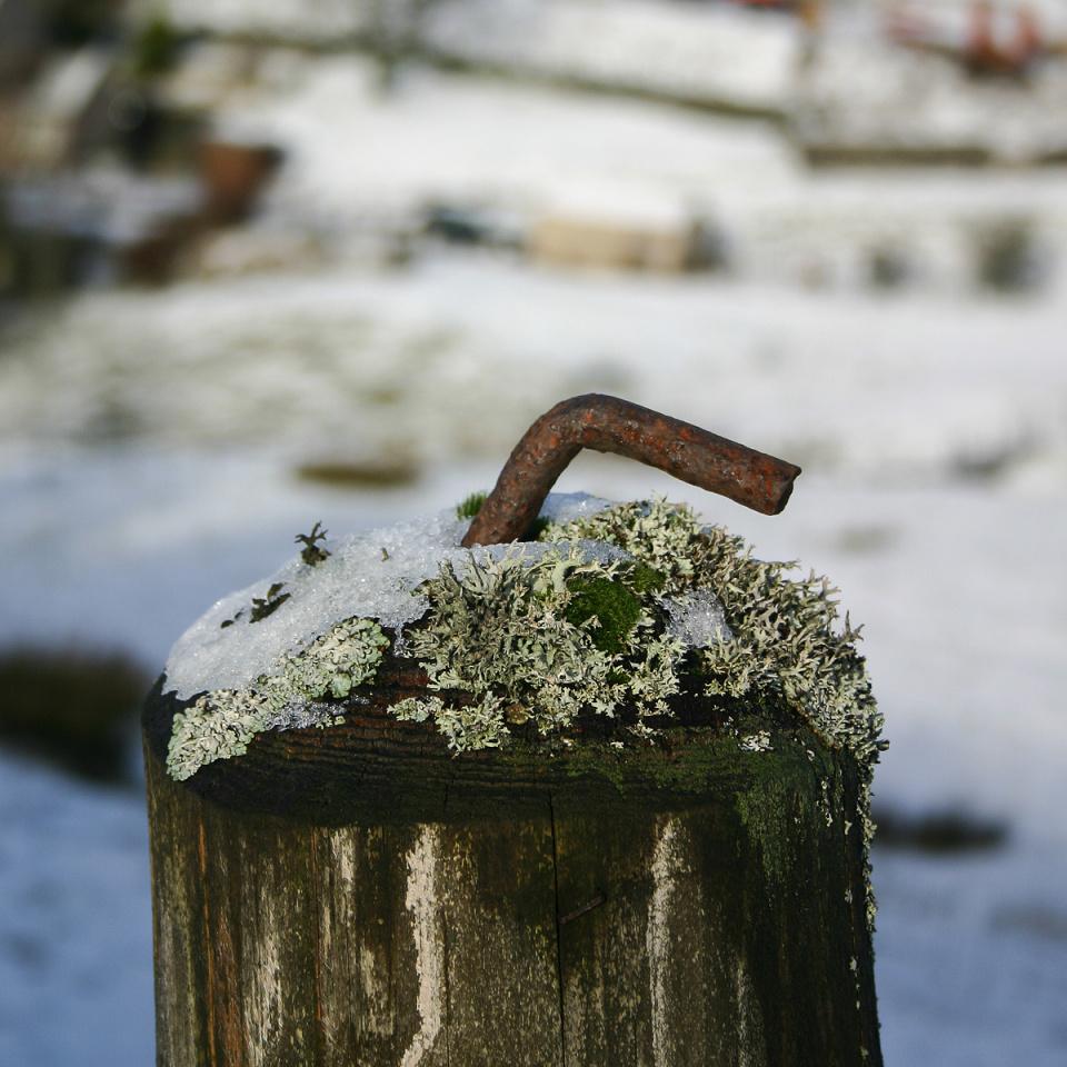 Fencepost (backblip)
