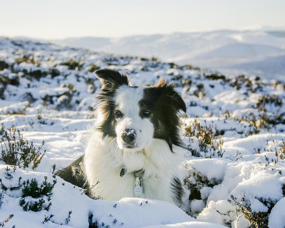 Griff in the Snow (backblip)