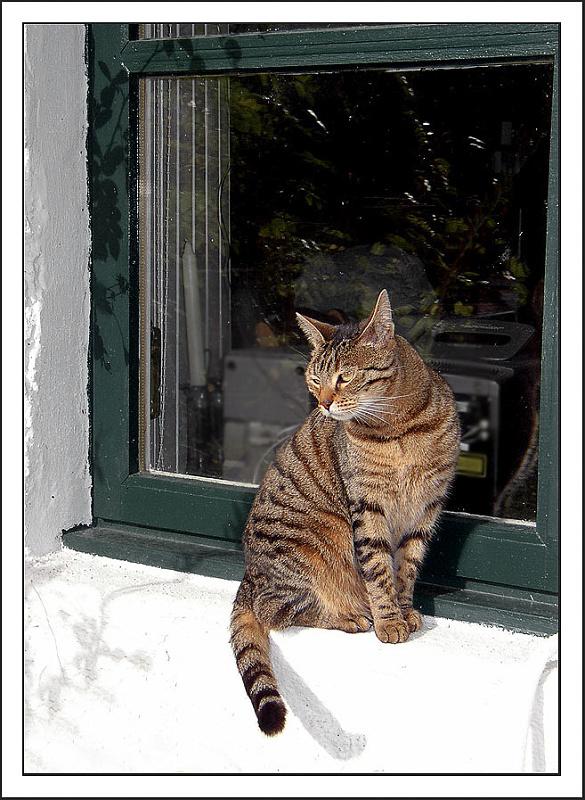 Cottage Cat (Backblip)