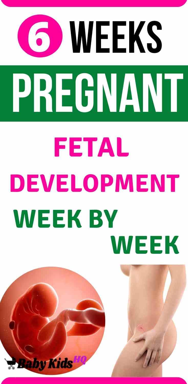 Baby Development 6 Weeks Pregnant