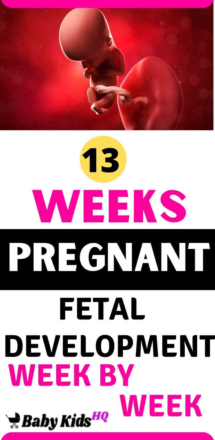 Baby Development In Womb: 13 Weeks Pregnant 1