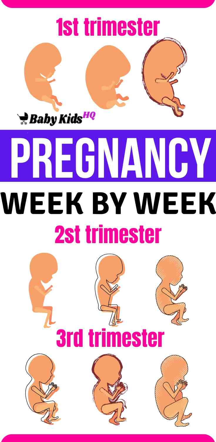 Week by Week Pregnancy development, learn how your baby is developing inside your womb & Track your baby's development, week by week. Also, know about your body changes during pregnancy. We compiled pregnancy week by week guide comparing fetus growth with fruits and vegetables to give a clear picture of your unborn baby development inside the womb. We wish the journey ahead is going to be extremely breathtaking and enjoyable at times. #pregnancy #pregnant #pregnancycare #fetaldevelopment #baby #momtips