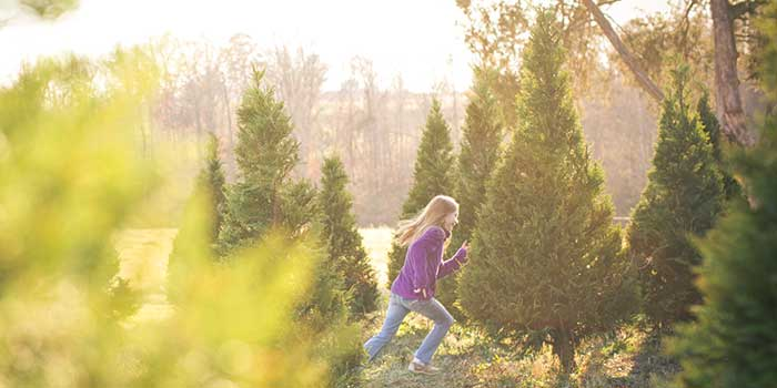 Making The Cut North Carolina Christmas Trees Our State