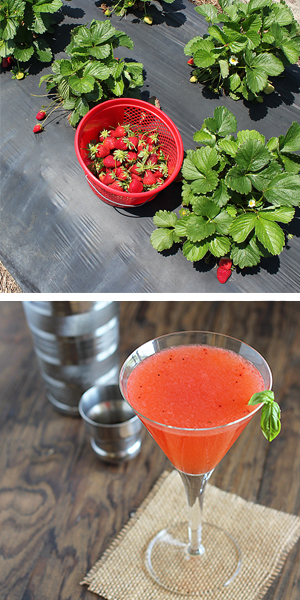 strawberry martini images