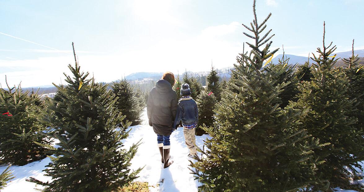 Ramblin' Man: Christmas Tree Hunting – Our State Magazine
