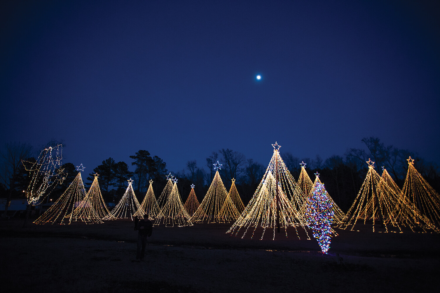 By day, they're just poles. But by night, the lights and stars turn them into Christmas trees.