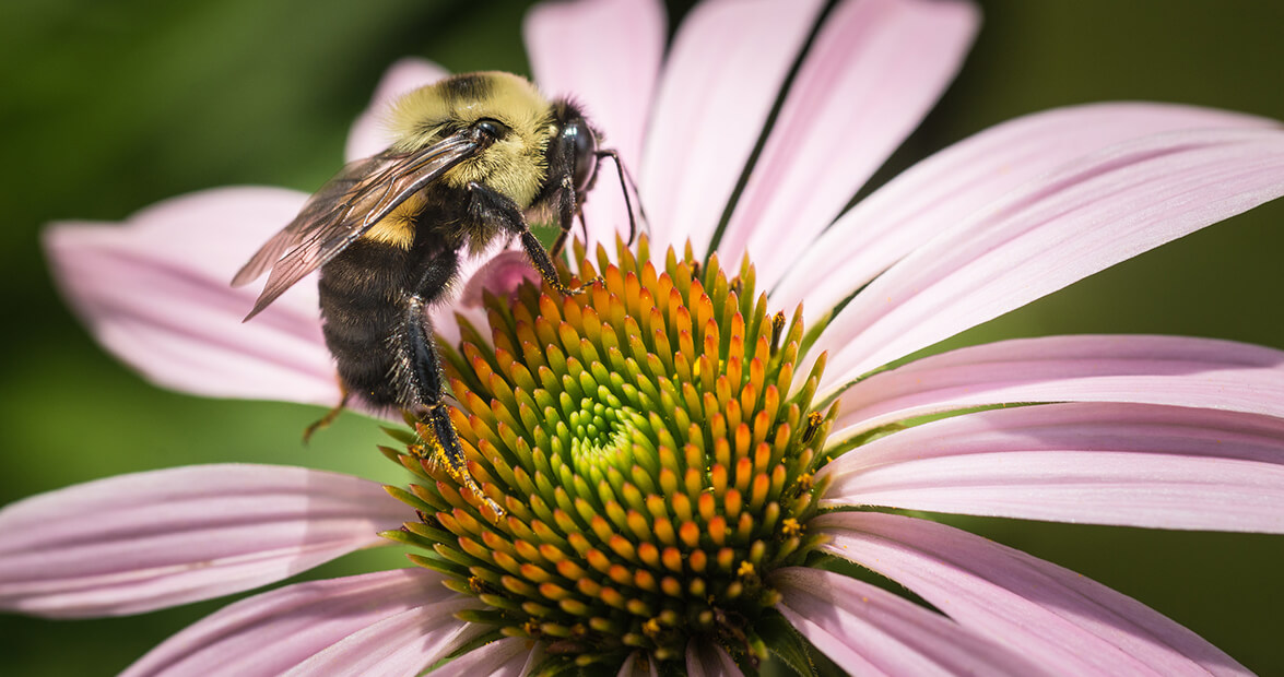 Tips For Planting A Bee Friendly Garden In Nc Our State