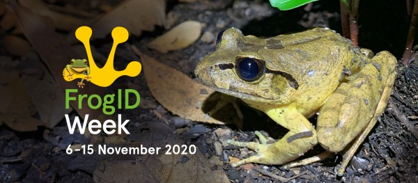 FrogID Week 2020 banner