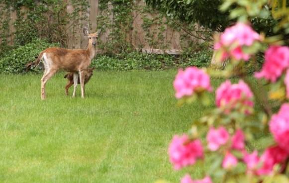 Deer following you?