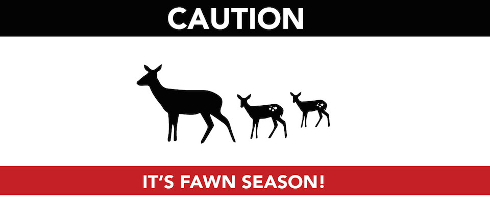 Slow Down and Watch for Fawns!