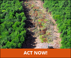 Save Trees; Stop the Constitution Pipeline - Catskill ...