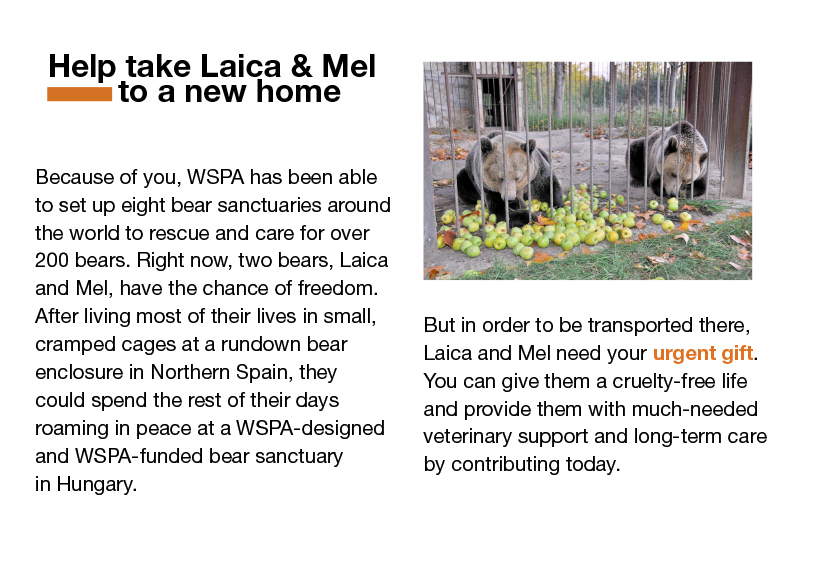 March-Newsletter-Slices_08_laica_mel.jpg