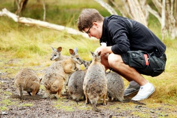 Half-Day Phillip Island Wildlife Day Trip From Melbourne