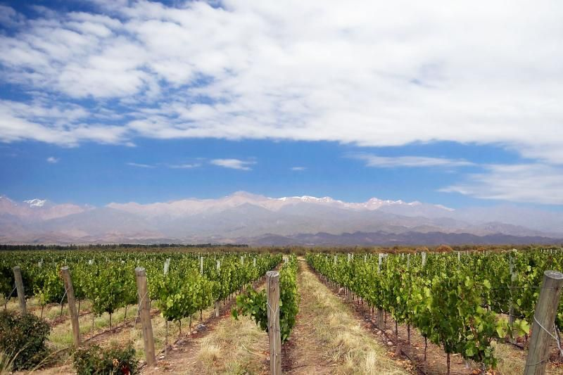 Uco Valley Wine Experience Tour