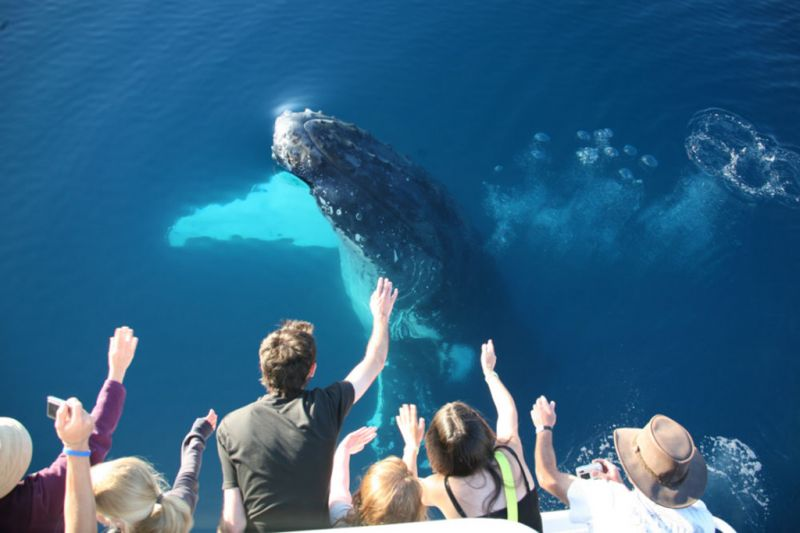 Half-Day Hervey Bay Whale Watching Tour