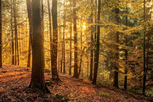 Baden Baden and Black Forest Tour from Frankfurt