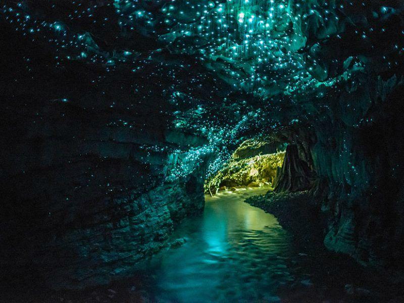 Half-Day Waitomo Caves Tour