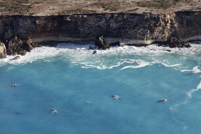 Xplore Eyre: Head of Bight Ocean & Outback - 3-Day Tour