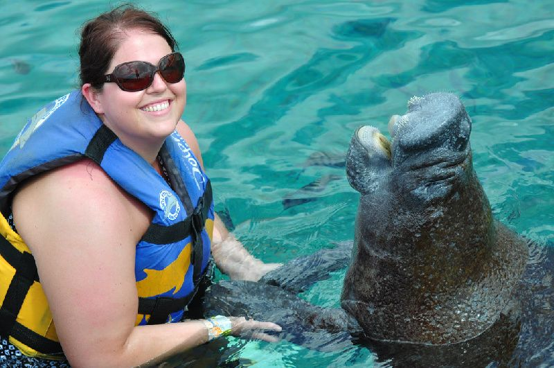 Swim with the manatees in Dolphin Discovery's Cozumel Park