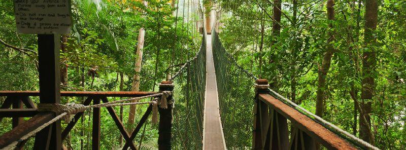 Private Tour: Amazing Taman Negara Day Trip Tour from Kuala Lumpur