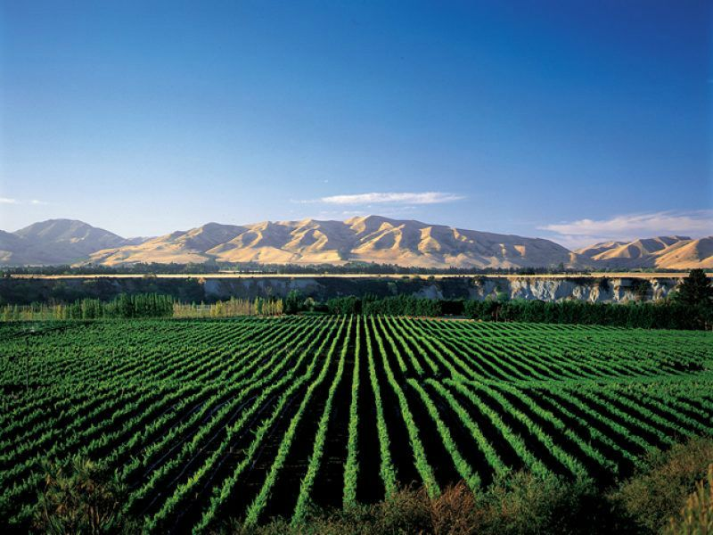 Marlborough Wine Full-Day Tour
