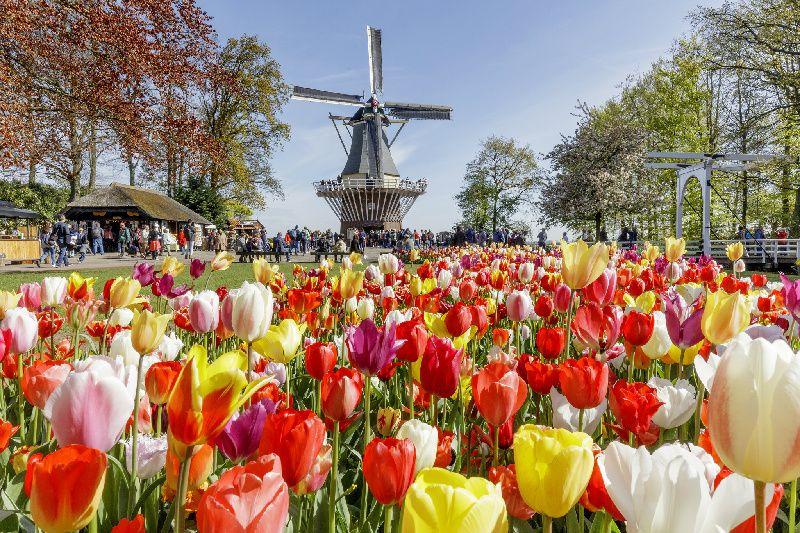 Amsterdam City Tour, Canal Cruise, and Keukenhof Flower Garden