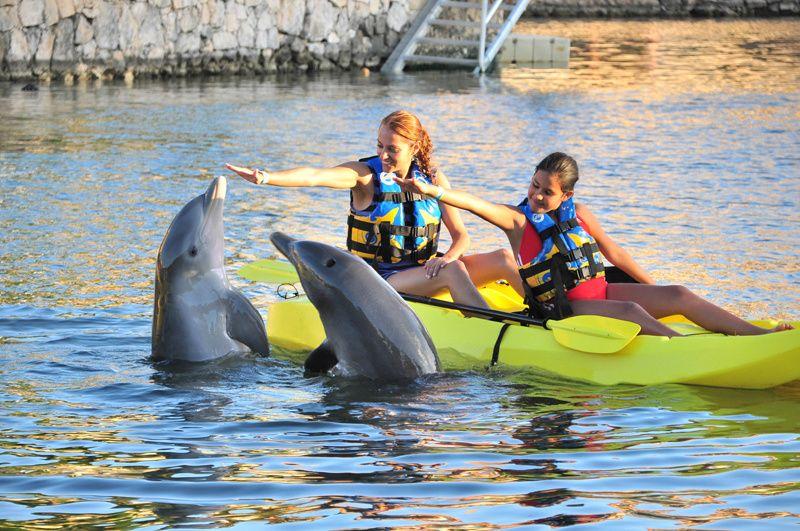 Dolphin Royal Swim at Puerto Aventuras