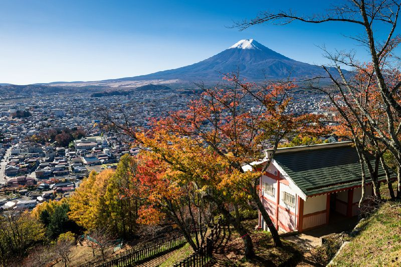Fuji's Best Cherry Blossom Spots Tour with Strawberry Picking