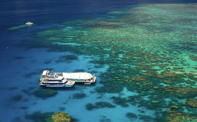 1-Day Silver Swift Snorkeling Departing from Cairns