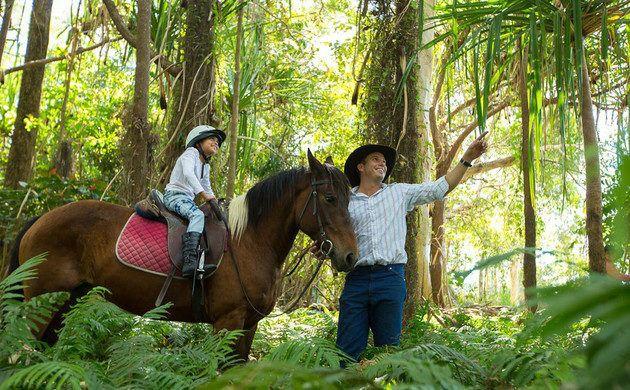 3-Hour Cairns Horse Riding Tour