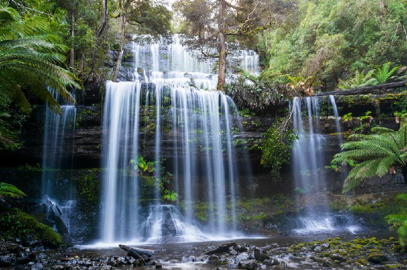 1-Day Russell Falls with Bonorong Wildlife Sanctuary Tour