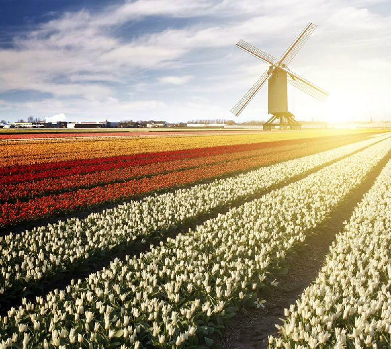 4-Day Amsterdam to Paris Tour: Holland   Belgium   France