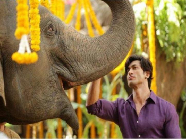 Image result for दमदार एक्शन और एडवेंचर से भरपूर है फिल्म 'जंगली'
