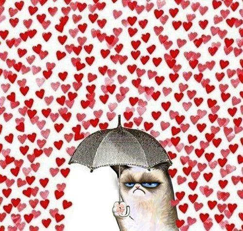 Grumpy Cat Tard Cat