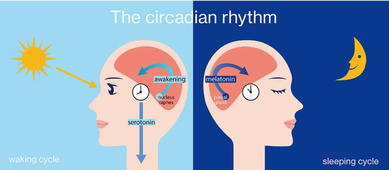 Blue light exposure can interrupt our circadian rhythm