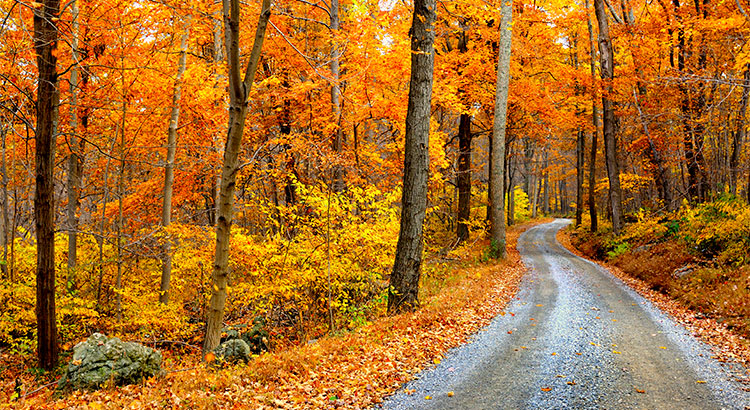 4 Reasons to Buy a Home This Fall! | Keeping Current Matters