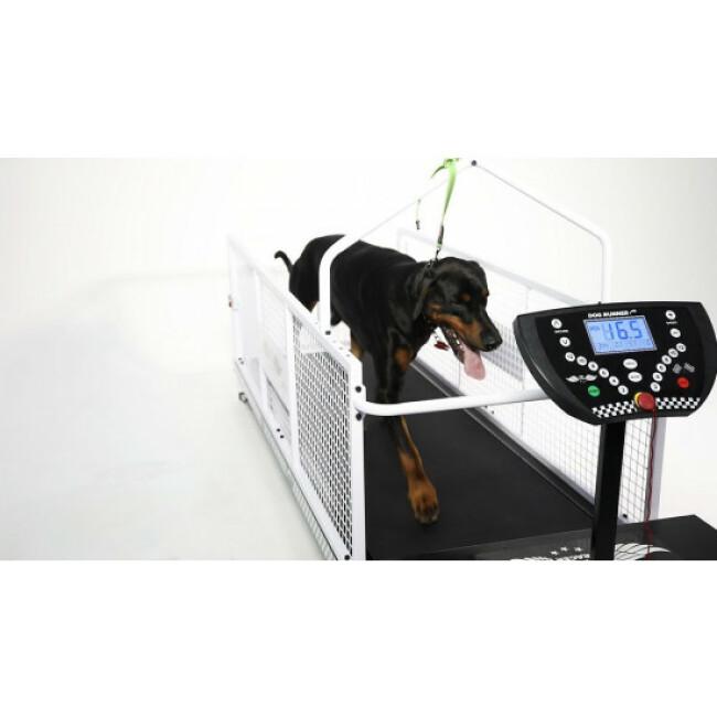 course pour chien dog runner k9 racer