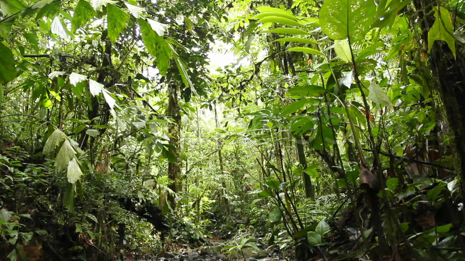 Tilt Down To A Rainforest Stream Stock Footage