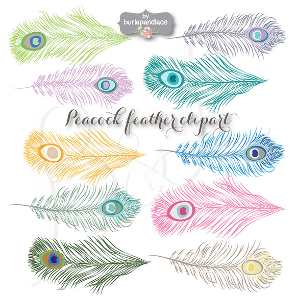 VECTOR Peacock Feather Clipart Illustrations On Creative Market