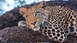 South Africa - Cape Town and Kruger